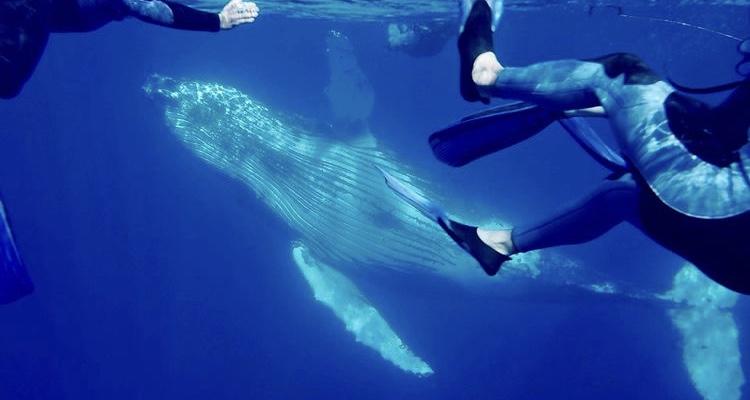 baleine, nager avec les baleines, voyageur responsable, témoignage
