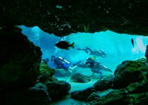 Plongée, faire de la plongée dans les calanques, calanques, visiter les calanques, activités à faire dans les calanques